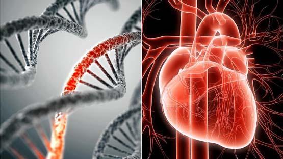 62% вколотих мРНК-вакцинами мають мікротромби і ризик серцевої недостатності – PSI (Великобританія)